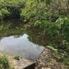 『樽ヶ池』静岡県掛川野池群バス釣り攻略マップ