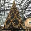 2016年ディズニークリスマス 東京ディズニーランドに行ってきたよ(前編)