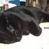 ◆ネコ用床暖房