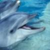 イルカの捕獲、ステーキ、フォアグラ
