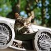 ぬっこくん、地域猫の写真展のオファーありました。