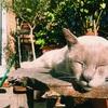 平和なはずのキャットシッター(ネコの世話係)に訪れた3つの試練
