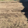 自然菜園 冬畝からスタート