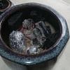 火鉢は良いものだ。焼き芋も焼ける。