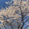 桜を見る会(少人数)