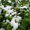 初雪、そして初床暖