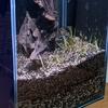 ミナミヌマエビ水槽:4日目生体導入&水草の植栽