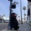 くまモン ロサンゼルスに出没