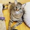 【DIY】猫トイレの丸見えを解消!トイレカバーを製作してみた話