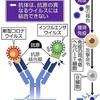 新型コロナ「T細胞」