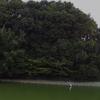 白鳥陵の白い水鳥