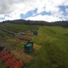 【タスマニアドリーム】バナナファーム経験者がストロベリーで働き出した結果