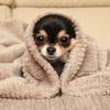 犬と暮らす家《犬の立場で考える家づくり》