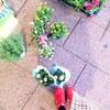 秋の寄せ植え鉢を10個購入!