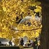紅葉感を求めて、昭和記念公園に行った