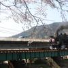 大井川鉄道の『家山の桜』を見に行きました。