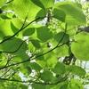 ◆'19/04/28     新緑の高館山①…大沢コース途中から横道へ