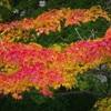 今熊野観音寺の紅葉2017、見ごろや現在の状況。
