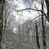 白神の森は雪化粧(小岳 山本郡藤里町)