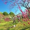春 風(11)