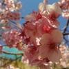 桜の下のアレ。宴のあとにご用心!