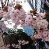 4/18(木)~4/24(水)