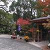 神戸の隠れオススメスポット!元町の日本庭園・相楽園の菊展。