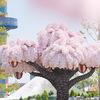 春にぴったりなレゴランド1周年記念イベント「ブリック・サクラ・パーティー」に行ってきました