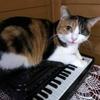 タケモトピアノのCMの三毛猫ちゃん?いいえ、ピアノが小さすぎです。