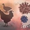 韓国ではコロナウィルスの裏で鳥インフルエンザが大流行!