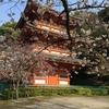 三重塔の桜~清水寺