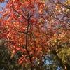 秋が好き。