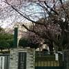 桜🌸 横浜 弘明寺