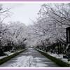 雪 昼・夕編