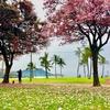 ハワイに恋して2 #7 アラモアナ周辺でコンパクトにハワイを満喫!