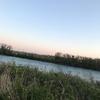 渇水に悩む、2019九頭竜川サクラマス・9日目