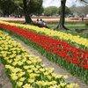 春の万博公園2チューリップフェスタ