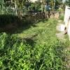 朝活🌅モーニング草刈り1時間強をやって気付いたこと。
