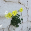 お茶目な花たち。。
