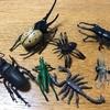 今日のテーマ invertebratesって何?