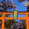 路地裏桜2018~「平野神社」