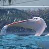 サンシャイン水族館 ラスト