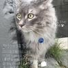 ポランカ「猫」写真展