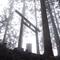 霧煙る御岳山ロックガーデンをしっとりと歩く