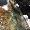日原の渓流が綺麗でオススメ!