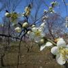 春野の花火