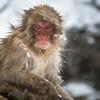 【恐怖】【悪夢】猿夢とは!夢の内容・猿夢の対処法・見ないようにする方法をご紹介。