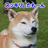 真夏の雪まつり NDA 桧枝岐村大会6 (2日目-1)