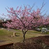 幹事さん必見! 館山で花見をすべき5つの理由(1)城山公園