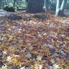 カラフル絨毯